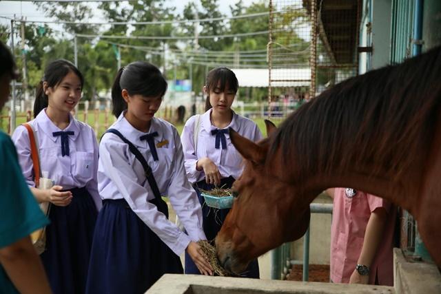 ชมรมขี่ม้า กองกิจการนักศึกษา มหิดล